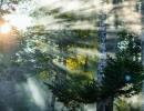 Наш-сказочный-лес.-Касатова-Мария,-9-лет,-с.-Перетычиха